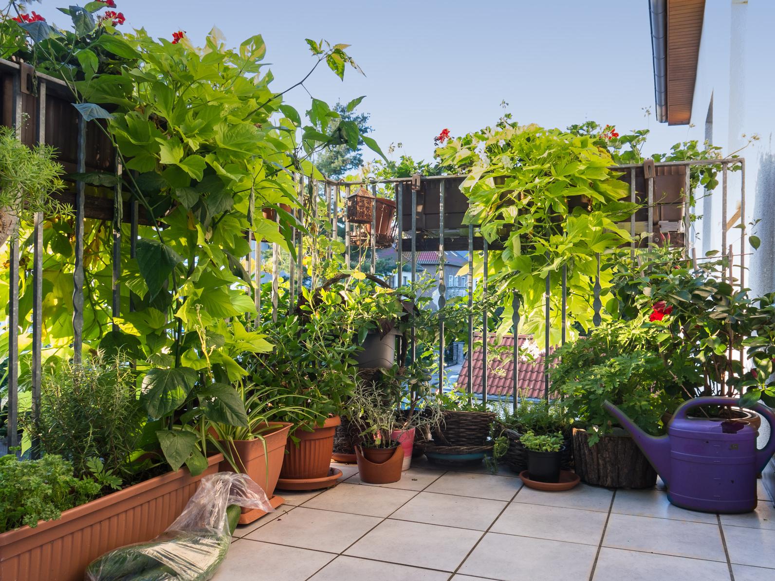 Bezaubernd Balkon Deko Ideen Beste Wahl Das Balkon-wohnzimmer Für Den Sommer; Ankenevermann/ Fotoliareview